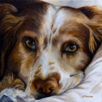 Madly Truly Talented – Erica's amazing pet portraits